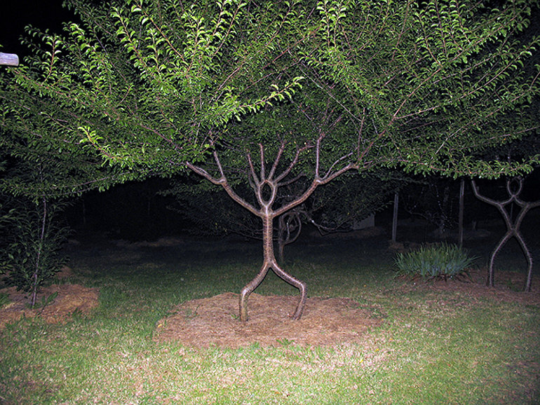 Ember alakú fa
