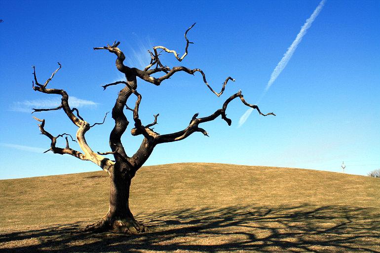 Kiszáradt, halott fa
